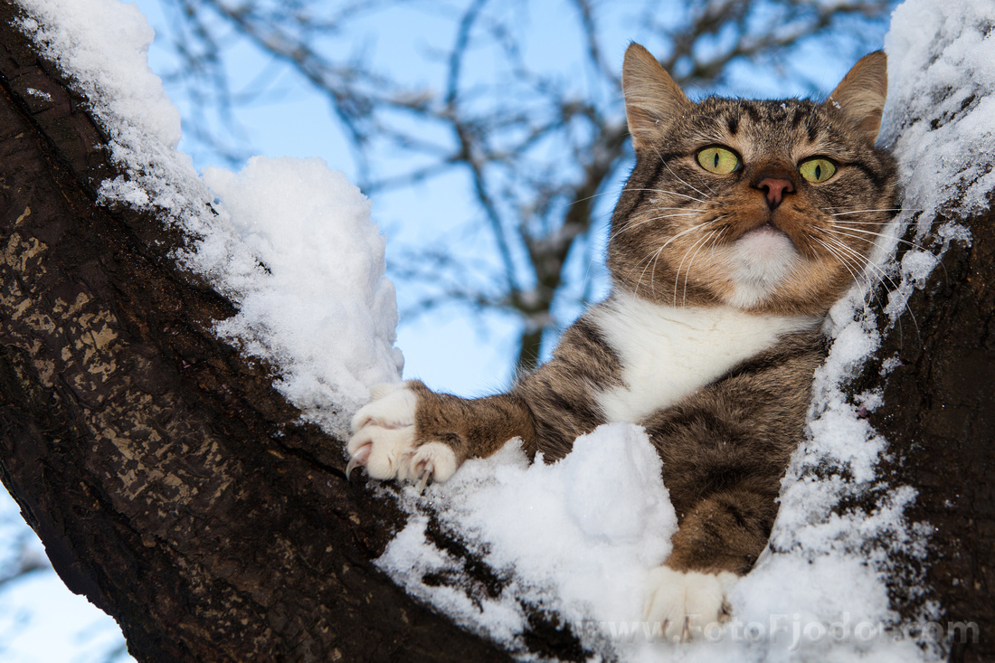 Surprised cat between tree branches covered with snow in winter