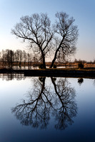 X shape of a lonely tree with reflection