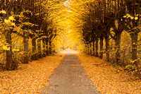 Golden alley