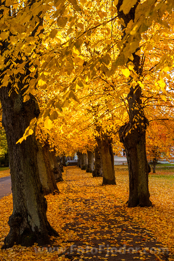Golden Autumn in Liepaja